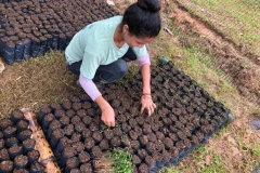 Soil-and-plants-collection-at-Chontaduro-community-10