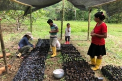 Plant-collection-at-Union-Ganadera-community-4-Copiar