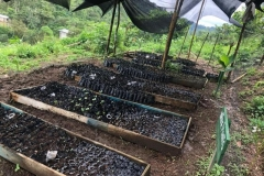 Plant-nursery-at-Nuevo-Carmen-community-3-Copiar