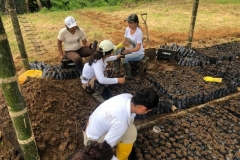 Soil-and-plants-collection-at-Chontaduro-community-13-Copiar